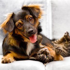 Un chien avec un chat
